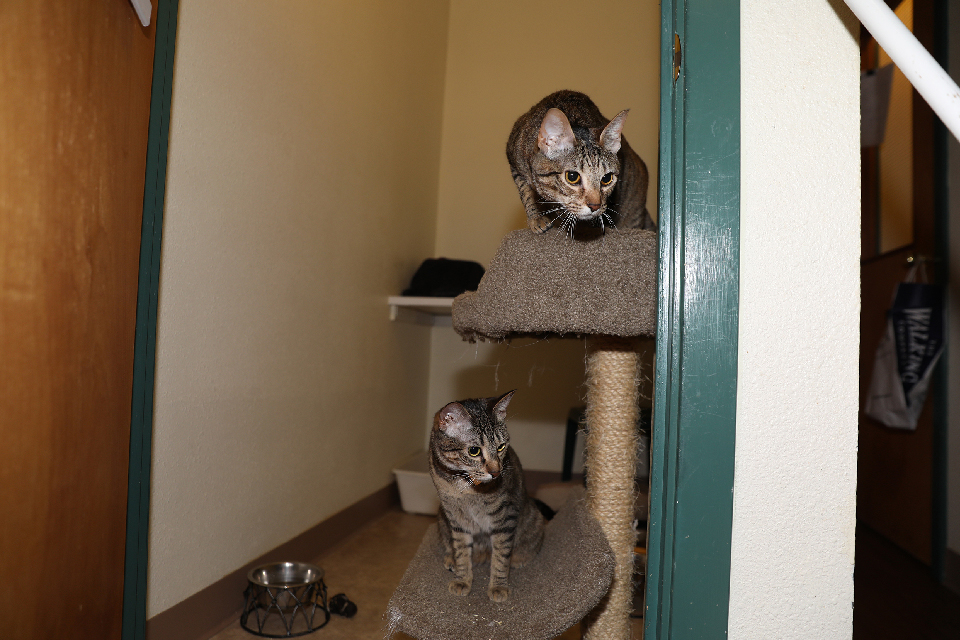 Eugene Cat Kennel | Auntie's Cage-Free Cat Condos With A View