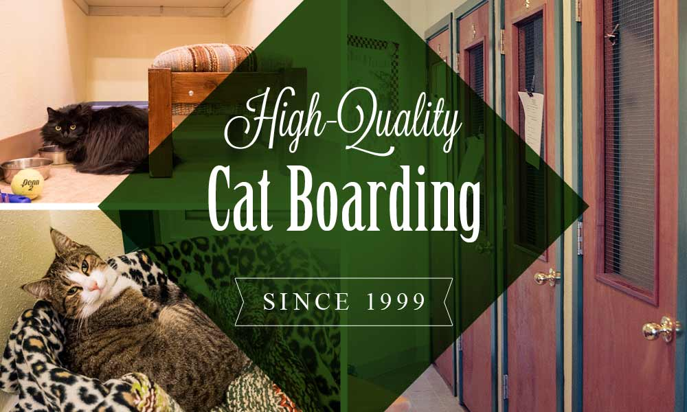 high quality cat boarding since 1999