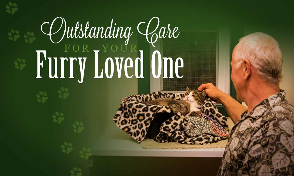 outstanding care for your furry loved ones